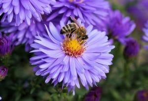 abeilles_agence de communication